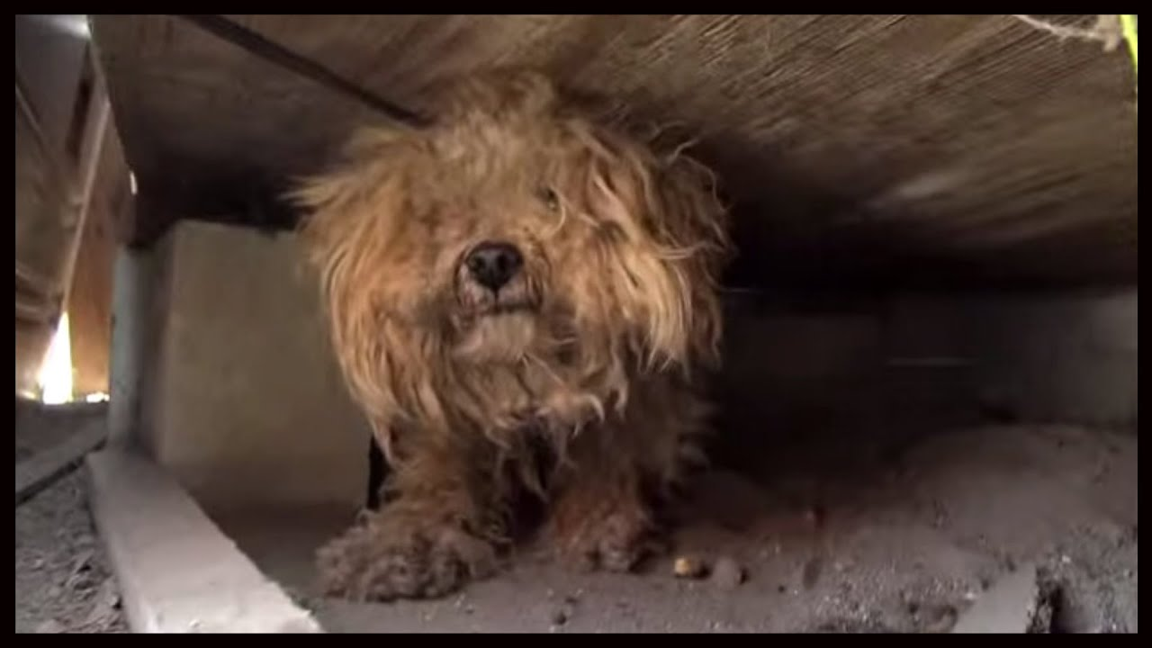 Dog Rescued From Under Shed