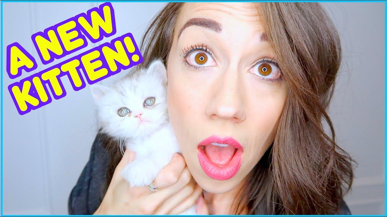 meet-my-new-kitten
