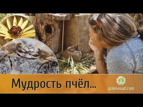 Мудрость Пчёл