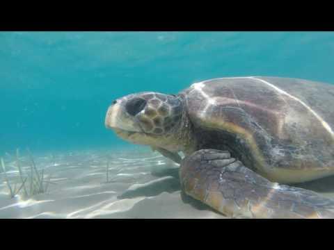 Turtle spotting and snorkeling Laganas Bay Zakynthos Greece Caretta sea turtle