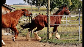 Expert Tips for Choosing the Right Horse