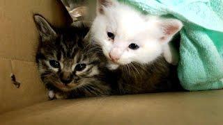 衰弱した兄弟猫を保護した。離れ離れになってしまった二匹の運命は… -Kitten Rescue