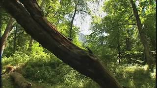 Stams Eichenwald Hirschkäfer