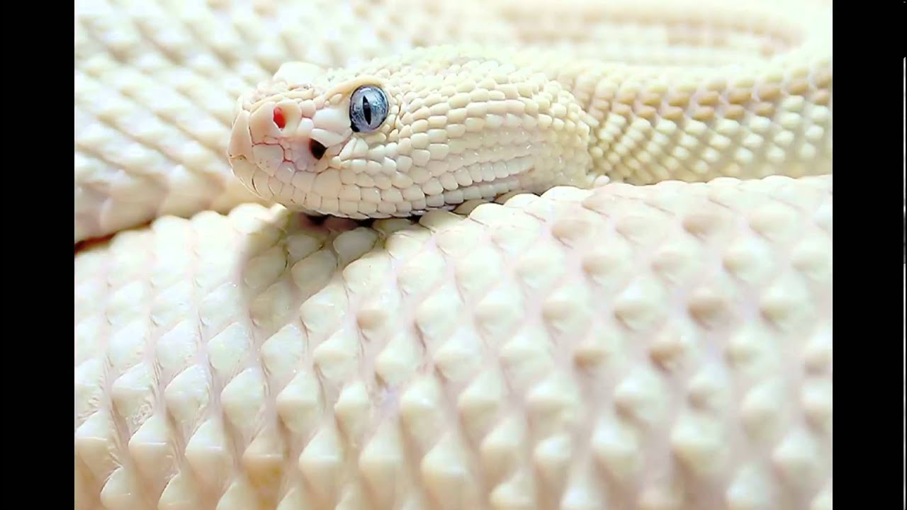 Dream the white snake youtube dream the white snake biocorpaavc Image collections