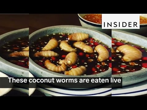 These coconut worms are eaten live