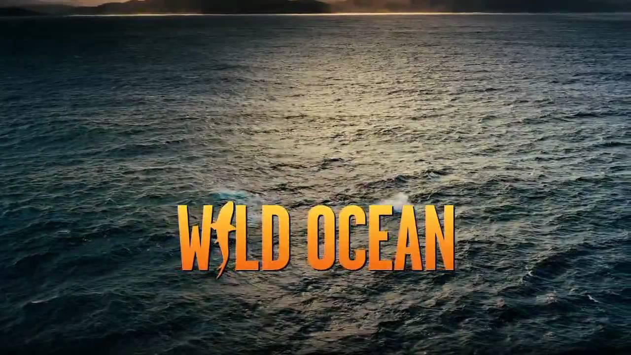 Download Wild Ocean Official IMAX Film Trailer HD