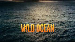 Wild Ocean Official IMAX Film Trailer HD