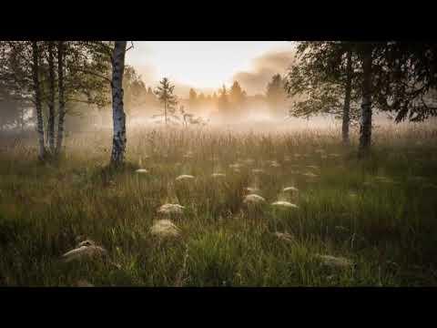 Пение сверчков, стрекотание цикад и кузнечиков 5 часов звуков природы
