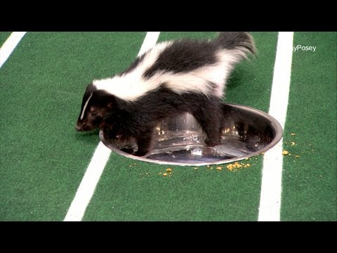 Watch Out for Stanley The Skunk | Puppy Bowl XII