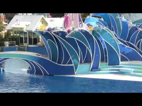 Caifornia Travel Destination Attraction| Visic Seaworld San Diego dolphin Show 2014