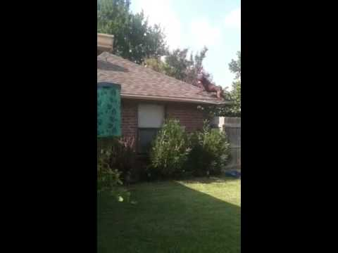 Pitbull jumping on top of house