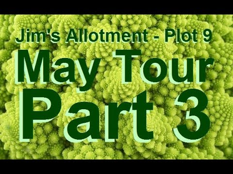 Jim's Allotment - Plot 9 - May Tour Part 3 - Onions, Beetroot, Cauliflower & Turnips