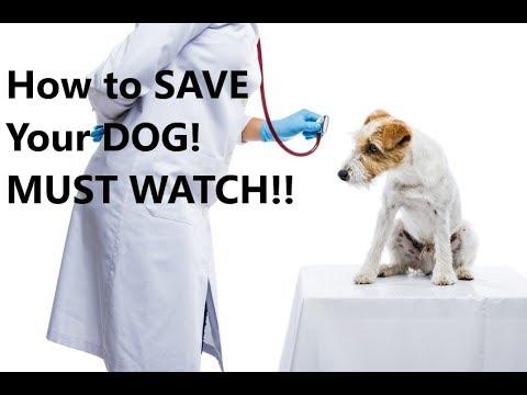 Good vs Bad Dog food (Avoid poisoning ingredients)