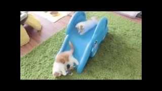 Подборка няшных видео про котят и деток - мило и нежно!
