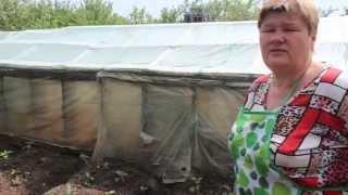 Секрет выращивания баклажанов. Часть II.(В этом видео я покажу вам способ выращивания баклажанов, которому меня научила кореянка (о нем я говорила..., 2015-05-31T08:00:27.000Z)