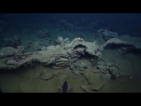 Endeavour Hydrothermal Vents