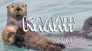Калан — Kalan