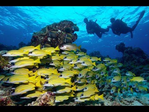 Best Diving sites in Maldives, Diving Maldive, Diving the Maldives