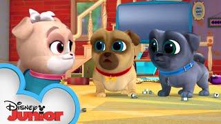 Arf-Choo! 🐾| Puppy Dog Pals | Disney Junior