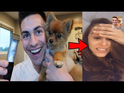 YANET REACTS TO ME SHAVING OUR DOG *HILARIOUS*