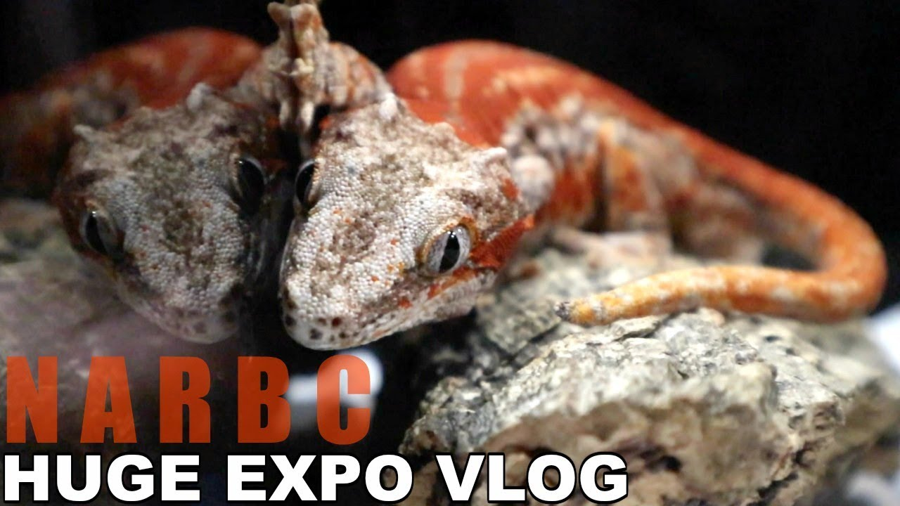 huge-reptile-expo-vlog-narbc-tinley-park