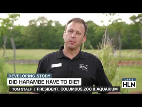 Did Harambe have to die?