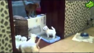 Прикольное и смешное видео про животных Funny videos about animals