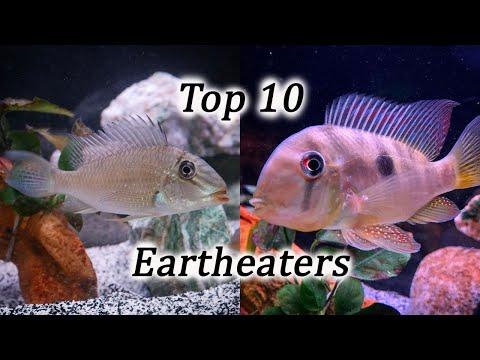 Top 10 Eartheater Species   Geophagus, Gymnogeophagus, Satanoperca