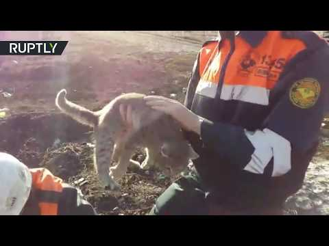 Cat rescued after getting stuck in a concrete slab