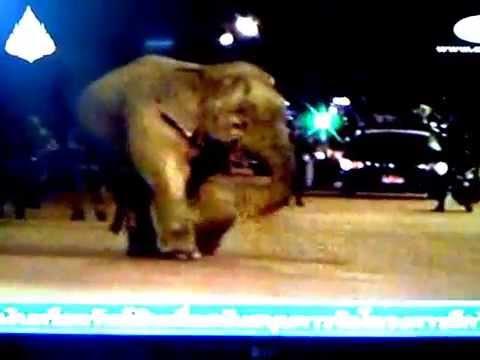 Elephant Rampage Highway Attacks Trucks Authorities Use Clown To Coax Away Elephant List