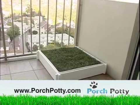 where to buy kitty litter box
