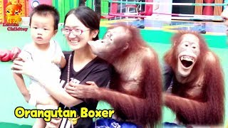 Hey!!!! Come to Taking a photo with a orangutan boxers