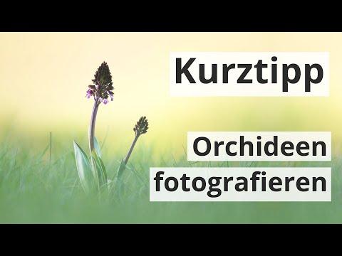 fototipp:-orchideen-fotografieren