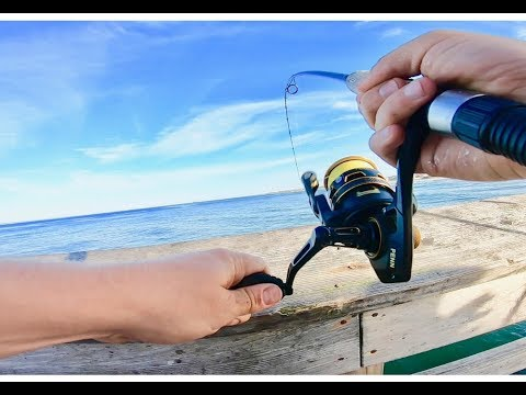 Pier Fishing For Spanish Mackerel And Bluefish With Gotcha Plugs