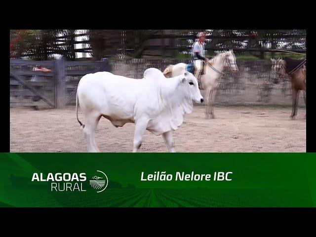 No dia 24 de outubro os irmãos Barros Correia realizam o tradicional Leilão Nelore IBC