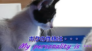 【猫は超可愛い!/Cute cats!】初めてのカメラのストラップに子猫それぞれの反応・ハチワレ保護猫