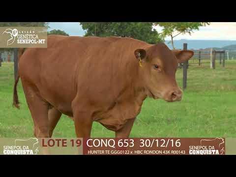 LOTE 19 CONQ 653