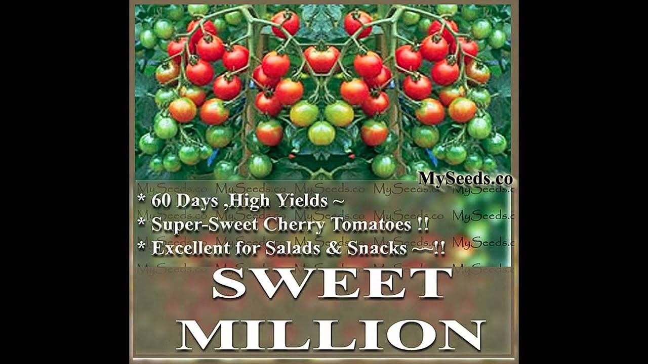 sweet million tumbling cherry tomato seeds seeds on www. Black Bedroom Furniture Sets. Home Design Ideas