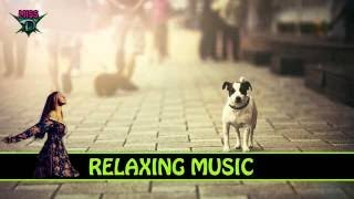 3 HOURS Relaxing Sound Background Music Punk Stage Dive