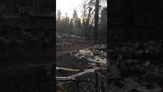NEVER LOSE HOPE! Cat Timber found exactly one month after Camp Fire in Paradise, Ca