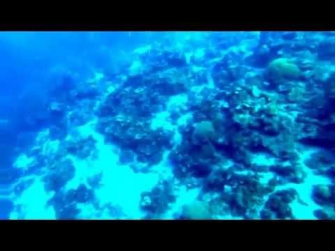 Saint Lucia -- Dive 1 -- Maritime Park, Sugar Beach -- 20150114