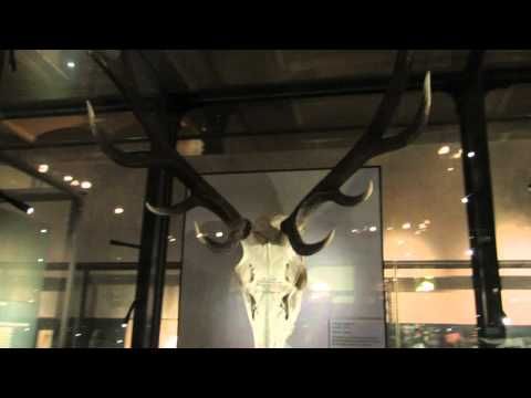End come too soon - natural history museum Berlin