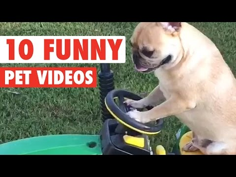 Top 10 Hilarious Pet Videos Compilation 2016