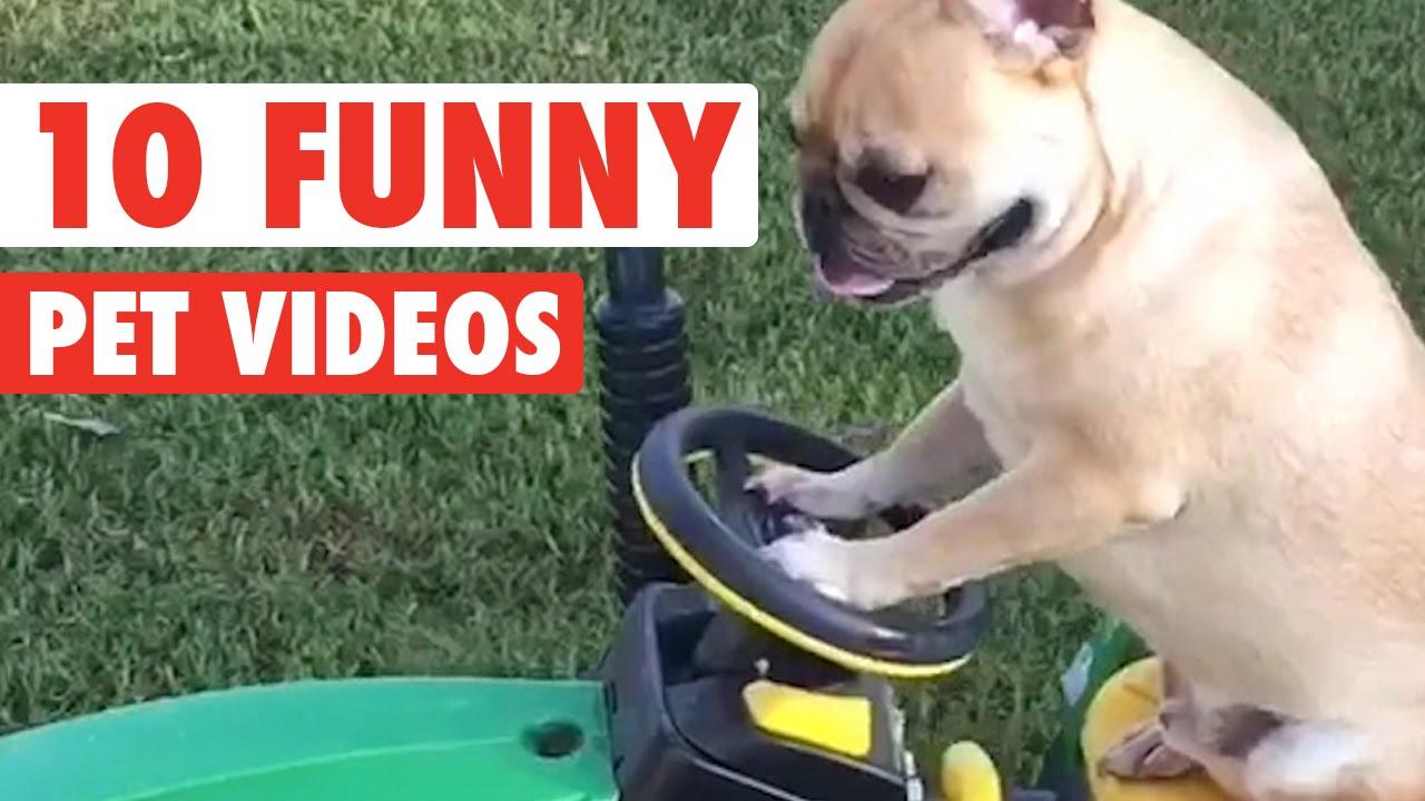 Top 10 Hilarious Pet Videos Compilation 2016
