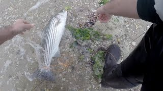 FEET WET Striped Bass Fishing Long Island - NORTH SHORE Striper's on the Fly
