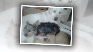 LostDogPhoenix.com - A Free Website for Finding Lost Dogs in Phoenix, Arizona