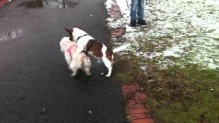 Microcip și înregistrare – cadrul legal pentru câini