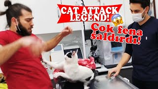 KEDİ SALDIRISI EFSANESİ!  Üç Kişi Zor Tuttuk!  ( cat attack ) #TheVet