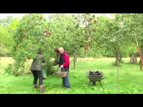 "TIDE TV - Rettet die alten Apfelsorten! - ""Hamburg immer anders!"""