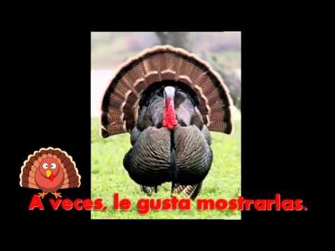 Pavo Canciones De Acción De Gracias Veo Un Pavo Youtube